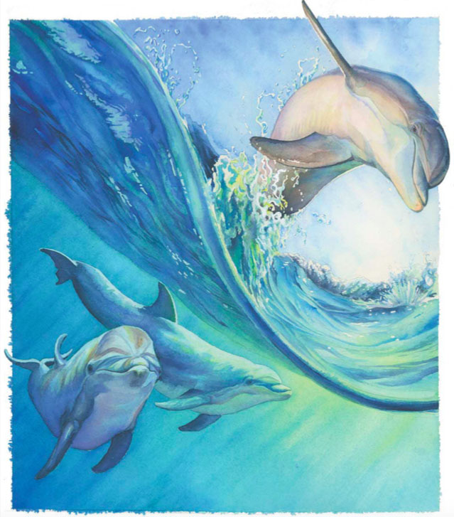 639x727 Painting Dolphins In Watercolor Quarto Knows Blog