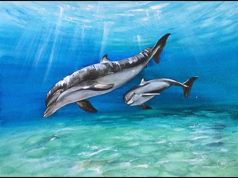 480x360 Watercolor Dolphins Painting Demonstration