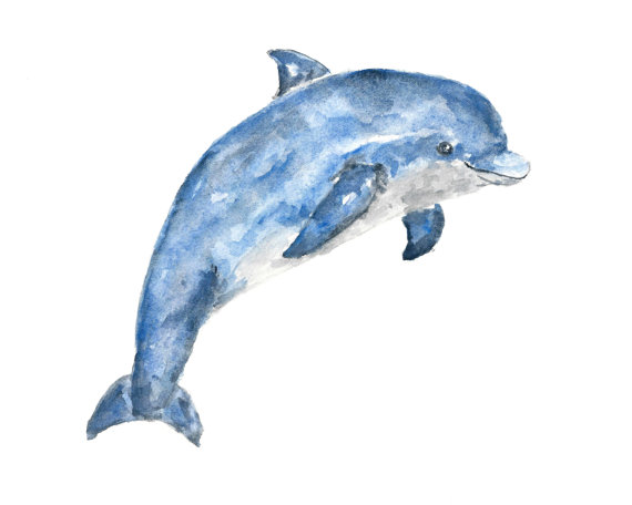 570x456 Animal Art, Watercolor Animals, Watercolor Dolphin, Beach Print