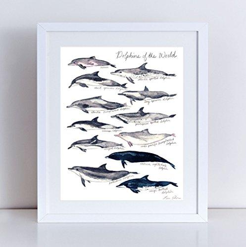 497x500 Dolphin Art Print Dolphin Painting Dolphin Wall Art