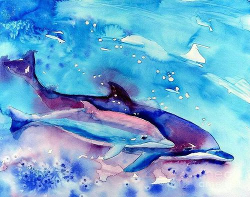500x394 Dolphin Watercolour