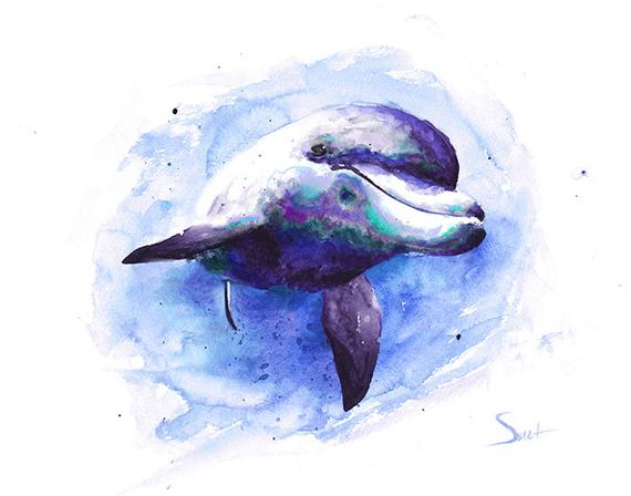 570x448 Dolphin Print Dolphin Painting Dolphin Watercolor Dolphin Etsy
