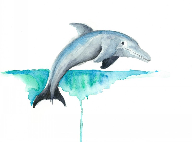 800x592 Sweet Watercolor Swimming Dolphin Tattoo Design By Enviousv