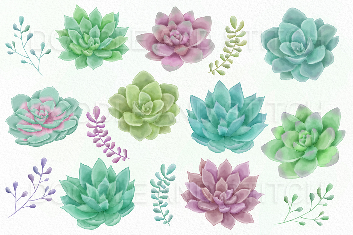 The Best Free Succulent Watercolor Images Download From 225 Free Watercolors Of Succulent At Getdrawings