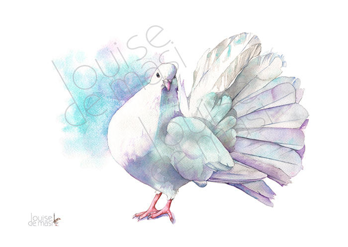 700x496 Dove Print Of Watercolour Painting A4 Size D22217 Dove Etsy