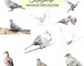340x270 Dove Watercolor Etsy