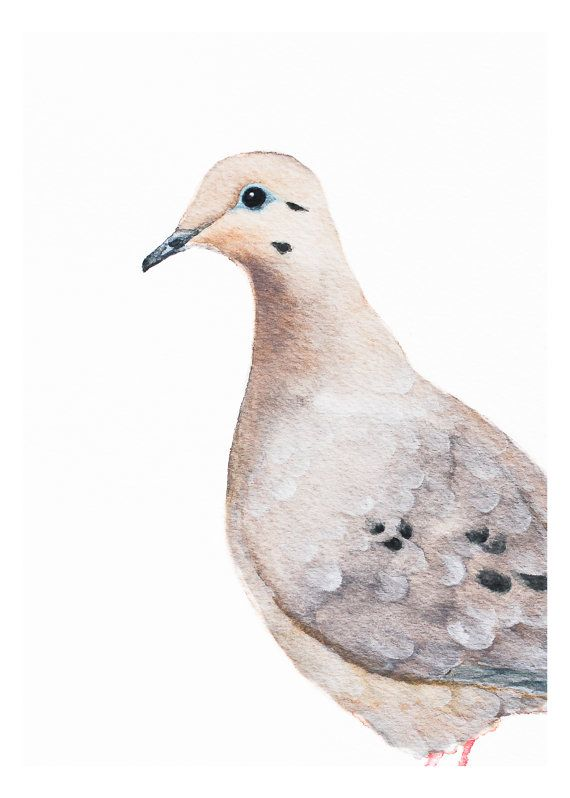 570x798 Mourning Dove