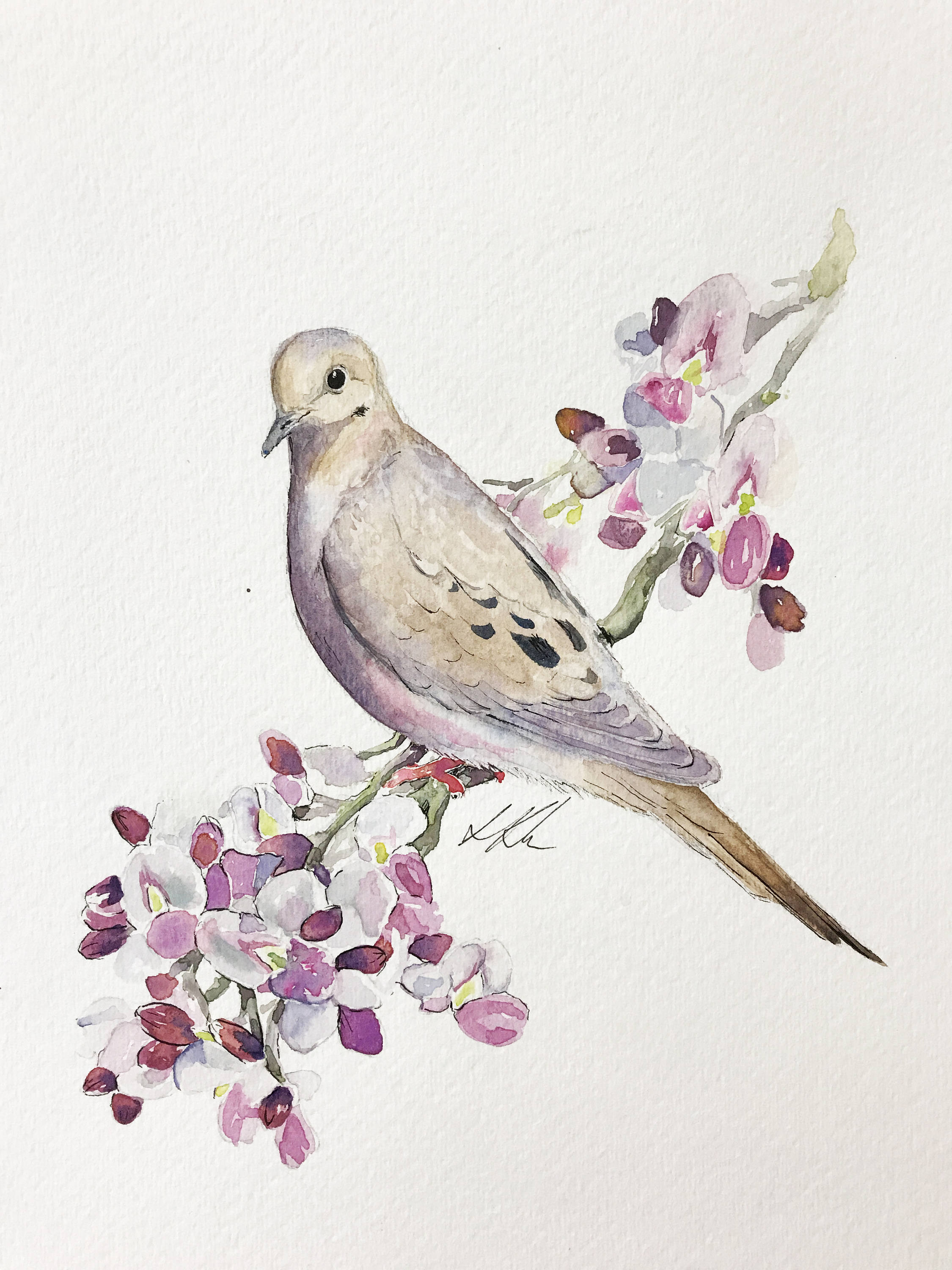 2250x3000 Mourning Dove Watercolor Painting Etsy