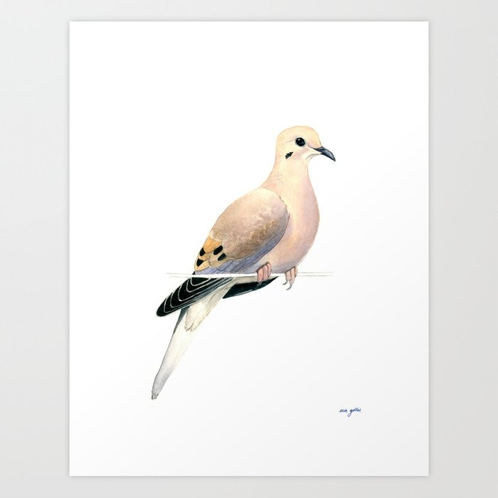700x700 Mourning Dove Watercolor Painting Art Print By Birdseedfieldguide