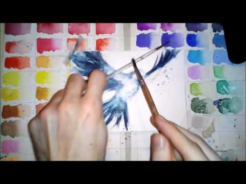 480x360 Peace Dove (Watercolor) By Tarso