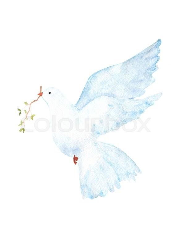 566x800 Watercolor Dove Clip Art Stock Photo Colourbox