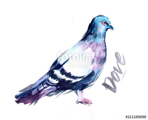 500x405 Watercolor Dove Stock Photo And Royalty Free Images On Fotolia