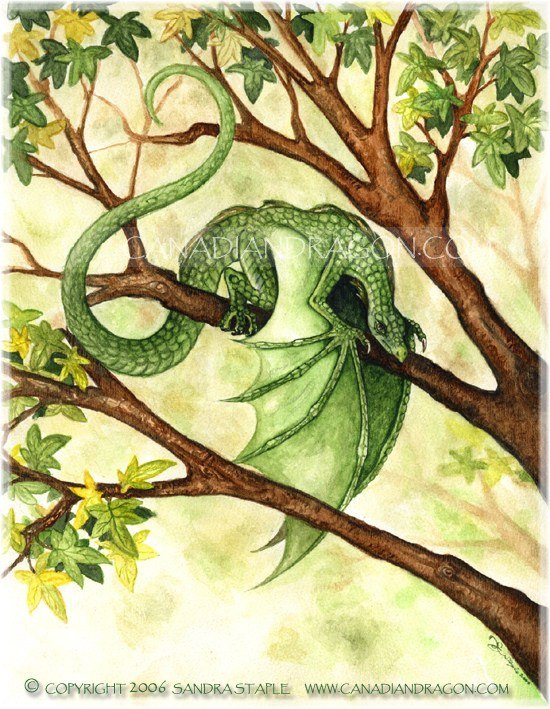 550x709 Canadian Dragon Fantasy Art Original Garden Fairy Dragon