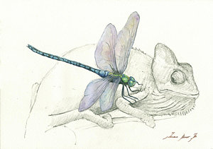 300x211 Dragonfly Watercolor Paintings Fine Art America