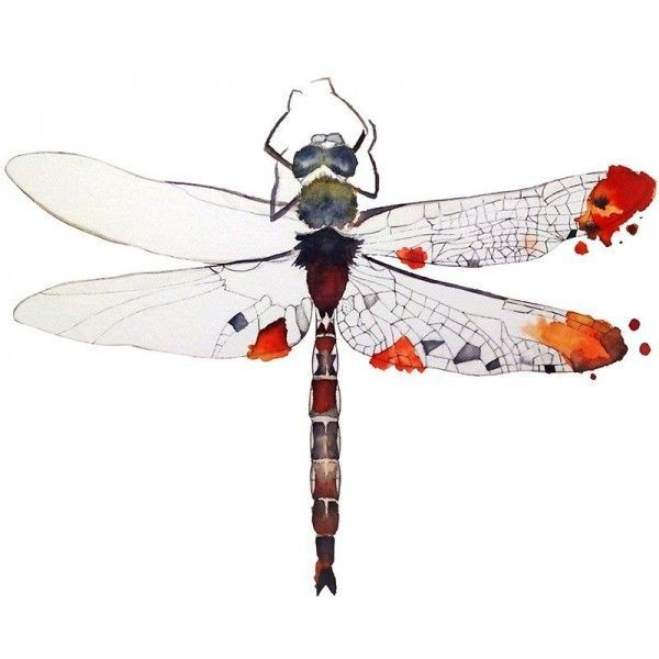 600x600 Dragonfly Watercolor T Shirt