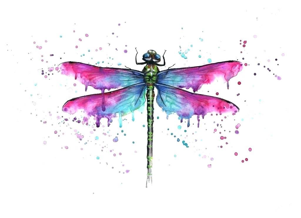 1024x742 Watercolor Dragonfly Dragonfly Park Watercolor Florida Watercolor