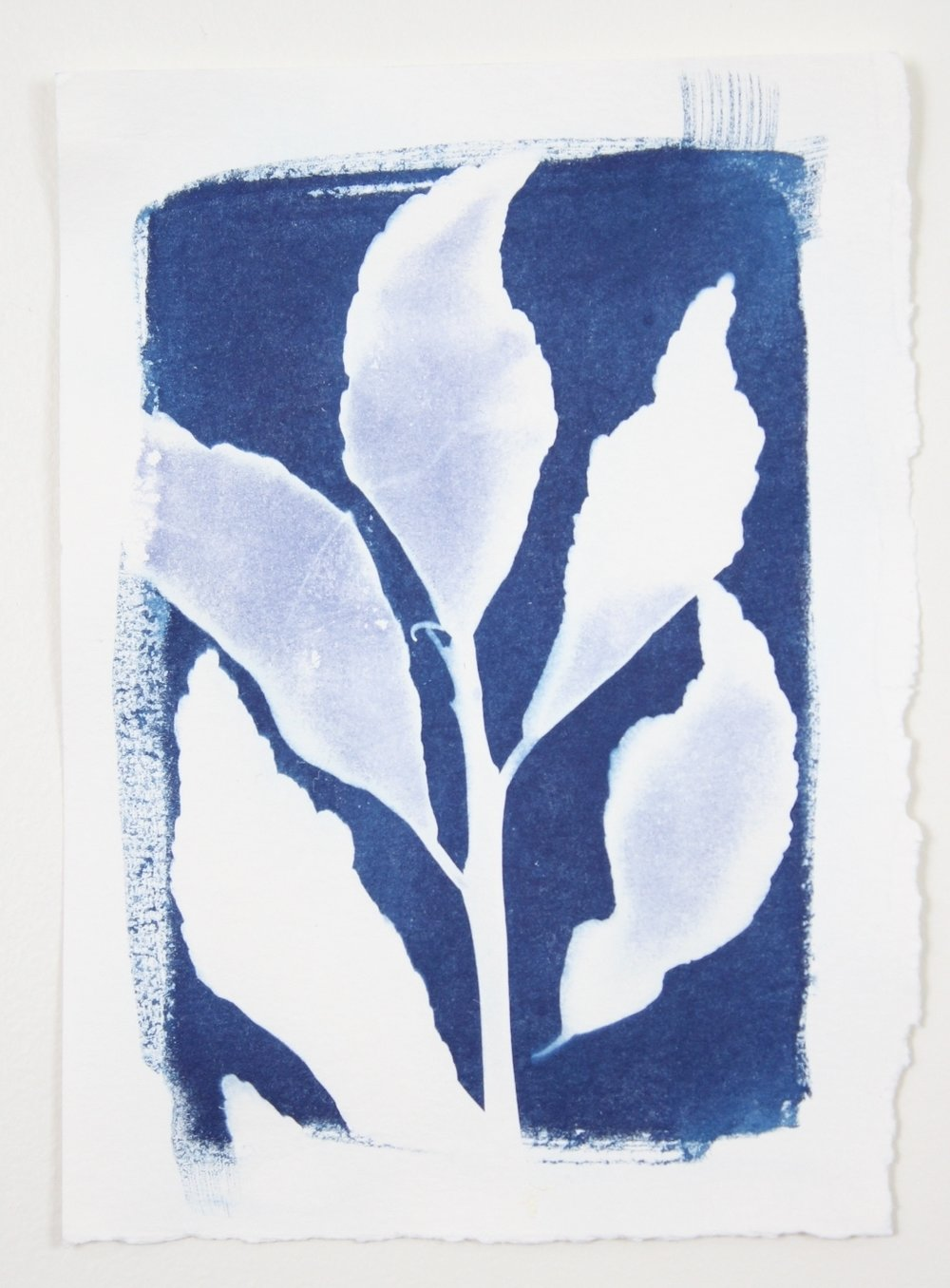 1000x1356 Solar Eclipse Small Botanical Cyanotype 4 Laurie Anne Art