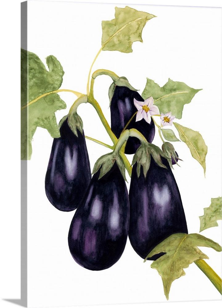 720x1000 Watercolor Eggplant Wall Art, Canvas Prints, Framed Prints, Wall