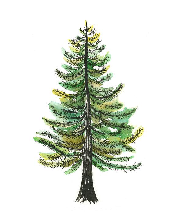 570x725 Watercolor Evergreen Tree Art Print