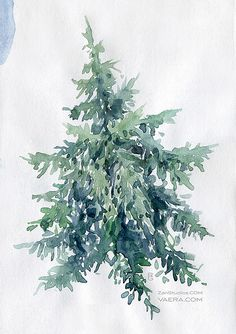 236x334 89 Best Watercolor Evergreen Trees Amp Pinecones Images