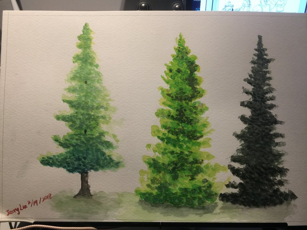 1032x774 Watercolor Painting Study Evergreen Trees By 7749