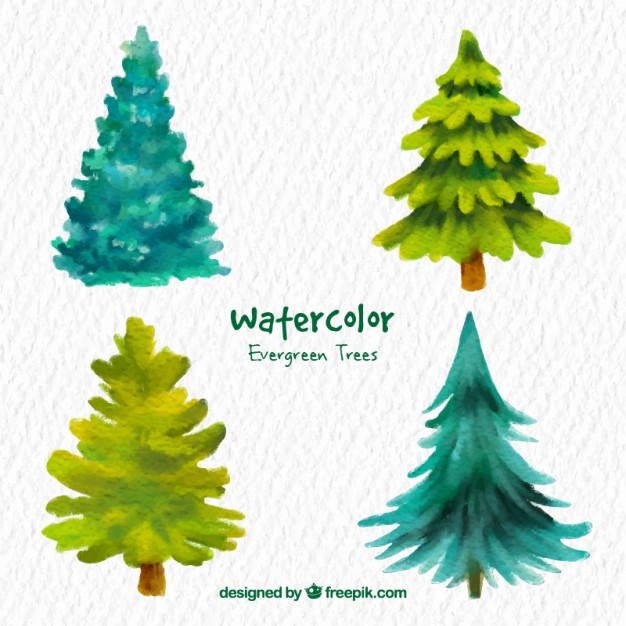 626x626 Watercolor Evergreen Trees Vector Free Download