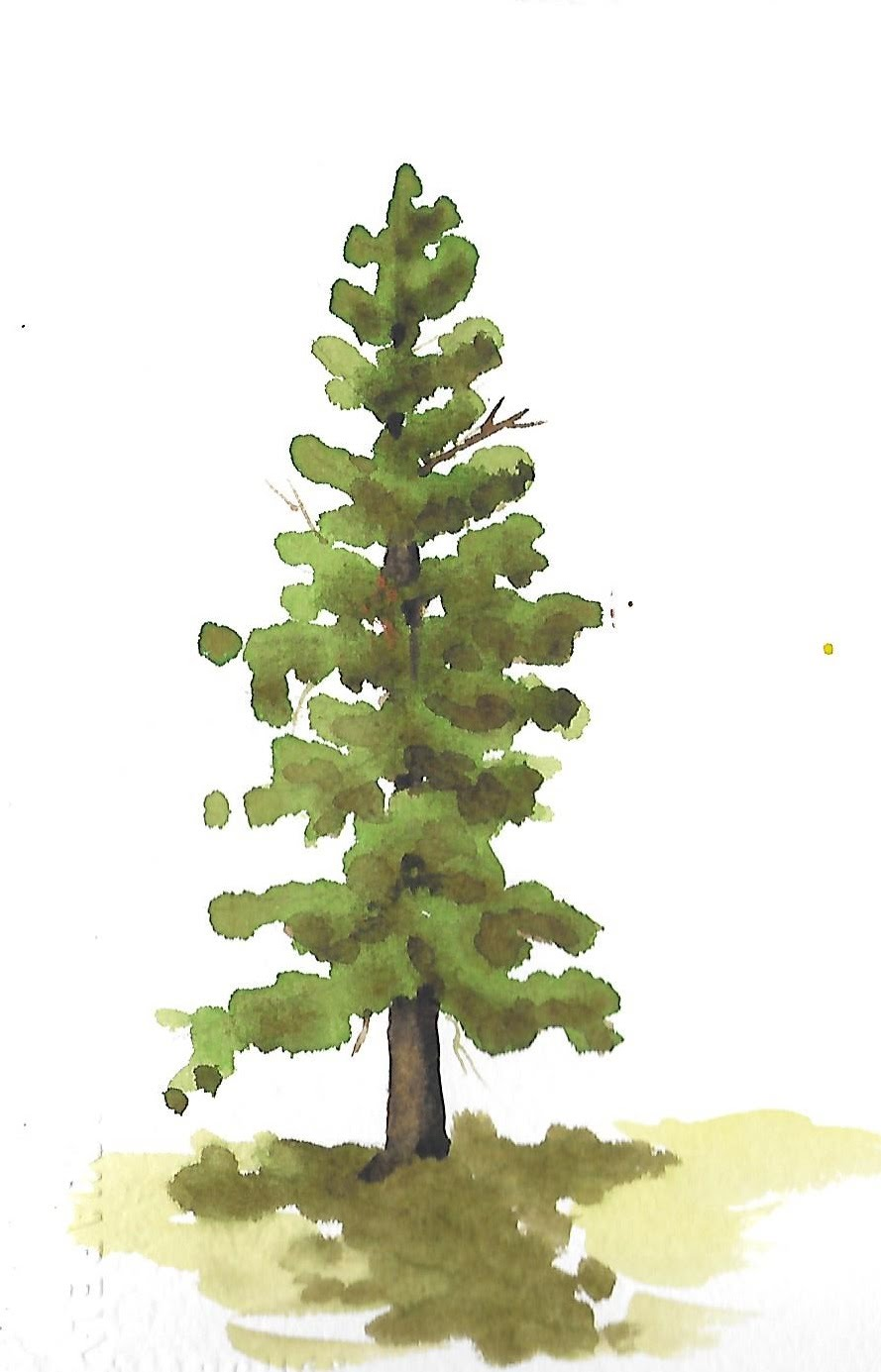 889x1385 How To Paint Trees