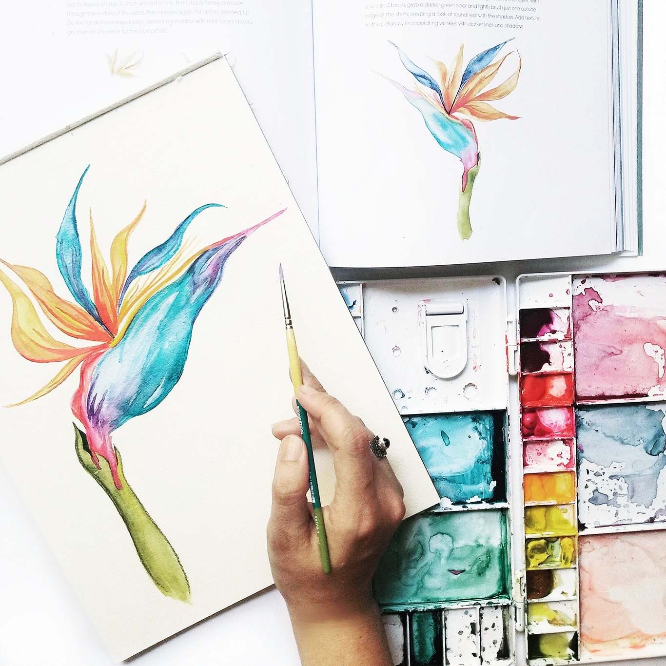 1366x1366 Everyday Watercolor Bird Of Paradise. Has Anyone Else Finished