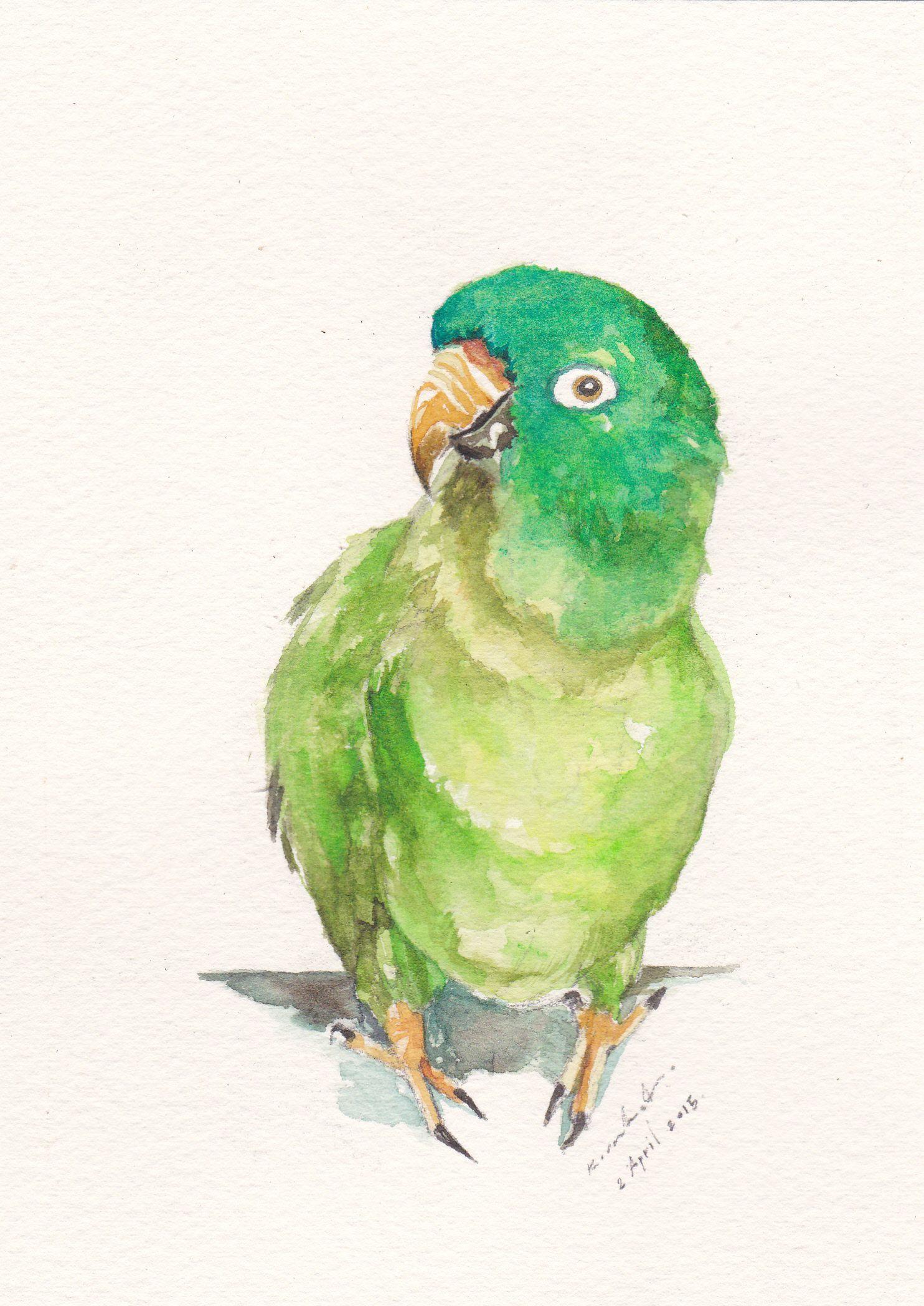 1484x2096 Original Watercolor Blue Crown Conure Parrot Httpswww.facebook