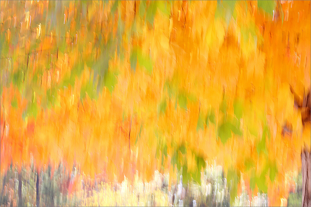 1024x683 Fall Color Abstract, Fall Colors Abstract, Abstract