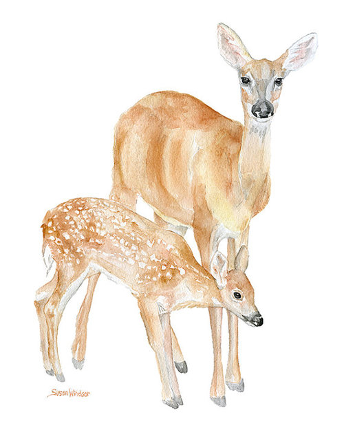 500x625 Doe And Fawn Watercolor Painting Giclee Print 8x10 By Susanwindsor