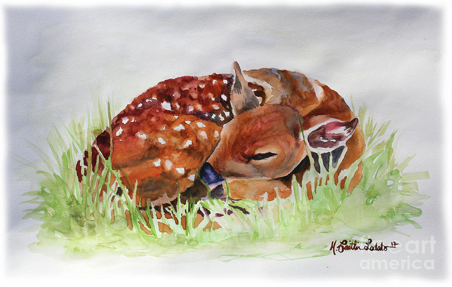 900x572 Fawn Sleeping Woodland Animal Watercolor Painting By Caitlin Lodato