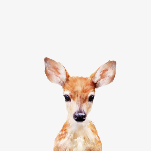 502x502 Moe Creative Expression Fawn Stay Pictures Avatar, Fawn, Animal