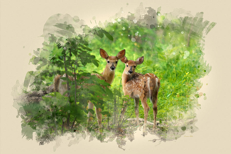 900x600 Two Deer Fawns Watercolor Art Mixed Media By Christina Rollo