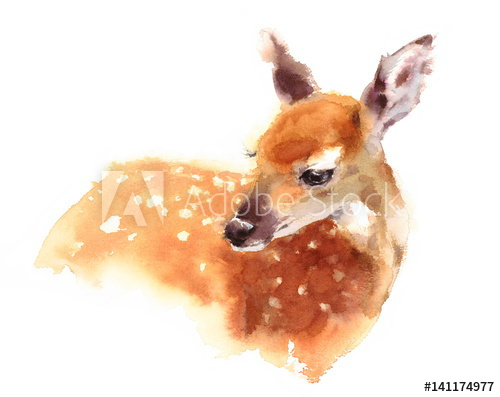 500x397 Watercolor Baby Deer Hand Painted Fawn Illustration Isolated On