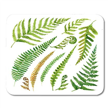 425x425 Boszina Mouse Pads Grass Curly Leaves Fern Watercolor