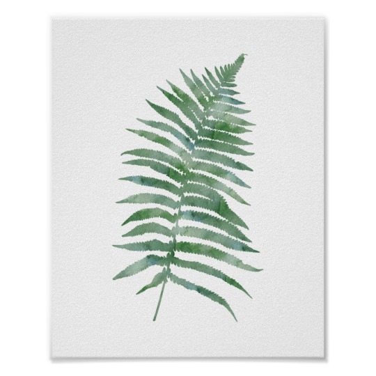 540x540 Botanical Fern Leaf Green Watercolor Nature Plant Poster