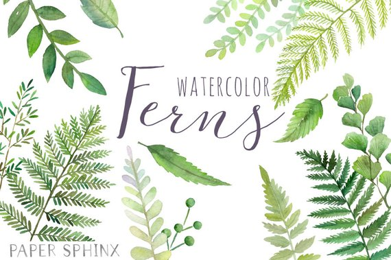 570x379 Watercolor Ferns Clipart Forest Leaves Clipart Greenery Etsy