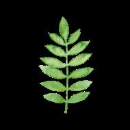 190x190 Watercolor Green Fern By Spreadshirt