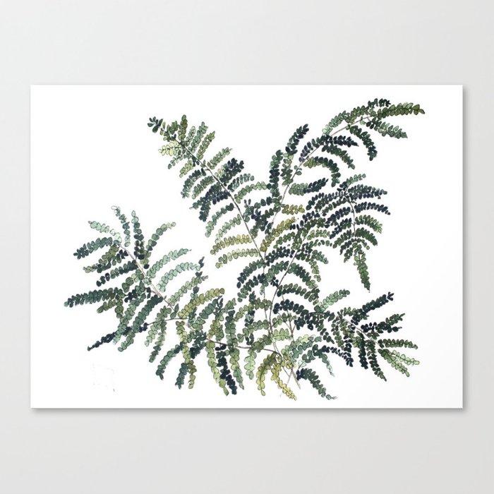 700x700 Woodland Fern Botanical Watercolor Illustration Painting Canvas