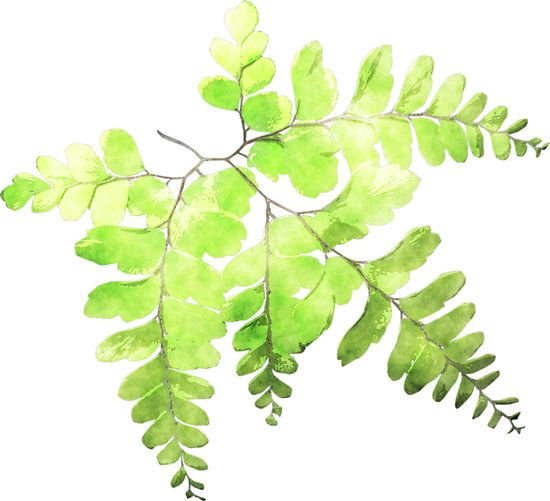 550x501 Watercolor Ferns