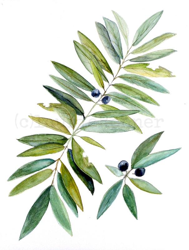 606x800 Botanical Woodland Fern Leaves Blue Berries Botanical Watercolor