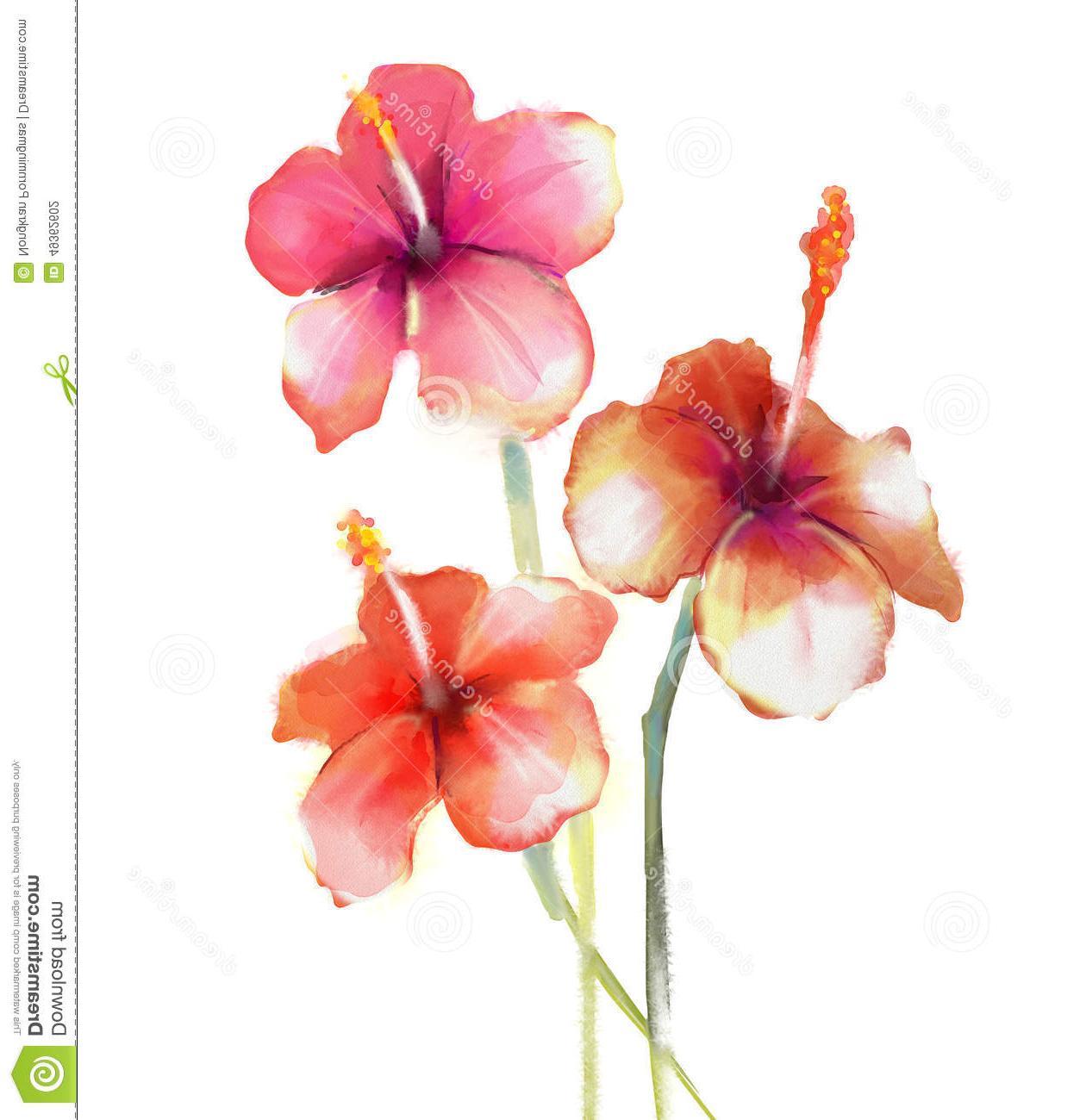 1260x1300 Hibiscus Watercolor Paintings Floral Watercolor Paintings