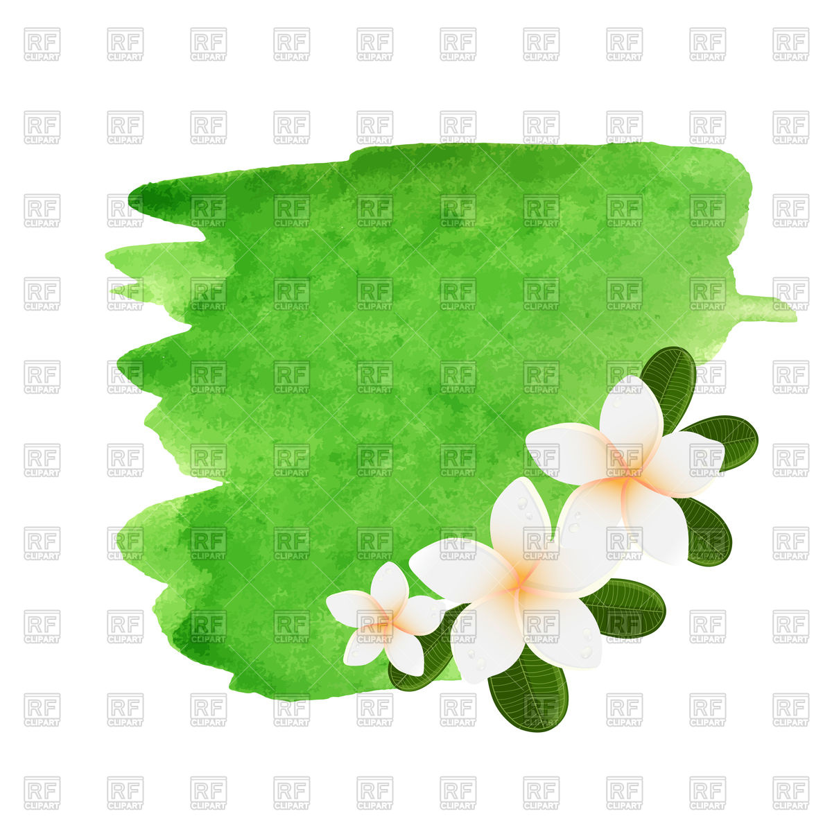 1200x1200 Watercolor Plumeria Flower Frame Vector Image Vector Artwork Of
