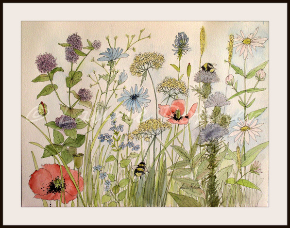 597x470 Garden Flower Illustration Botanical Watercolor Wildflowers Herbs