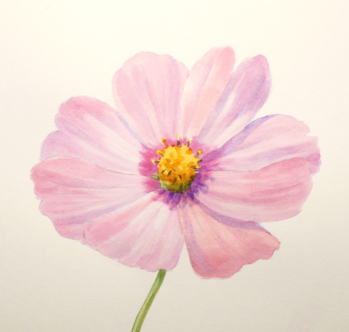 500x475 Paint Draw Paint, Learn To Draw Water Color Basics A Cosmos Flower
