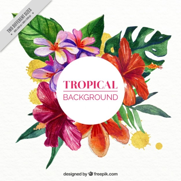 626x626 Tropical Flower Vector Free Download Tropical Flowers Background