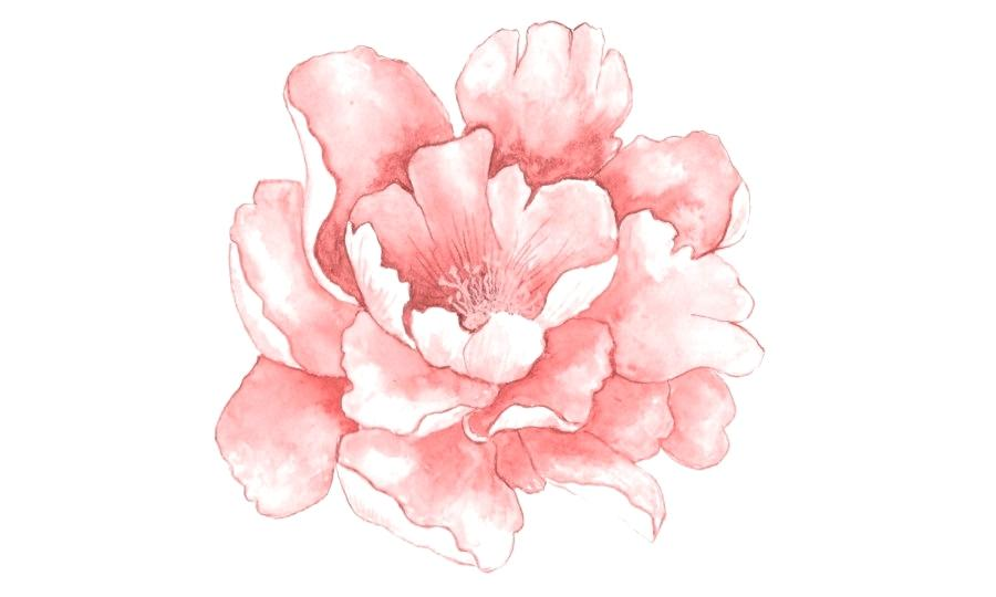 900x540 Water Color Flower Pink Flowers Watercolor Painting Pink