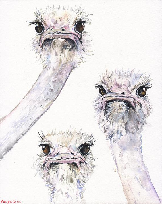 570x715 Ostriches Funny Friends Watercolor Original Painting Art Etsy