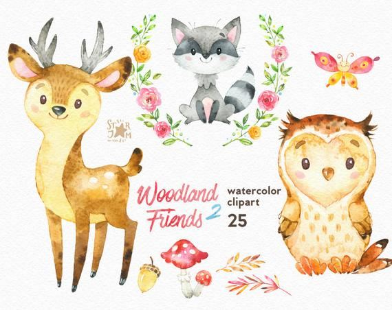 570x452 Woodland Friends 2. Watercolor Animals Clipart Forest Deer Etsy